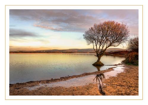greatbritain reflection water southwales clouds sunrise nikon lonetree midglamorgan d7100 kenfigpool
