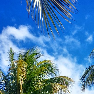 palm tree and sky picture