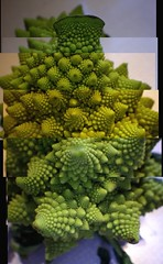 Smushed Romanesco Broccoli Panorama