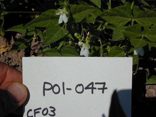 P01-047 CF03 Fl