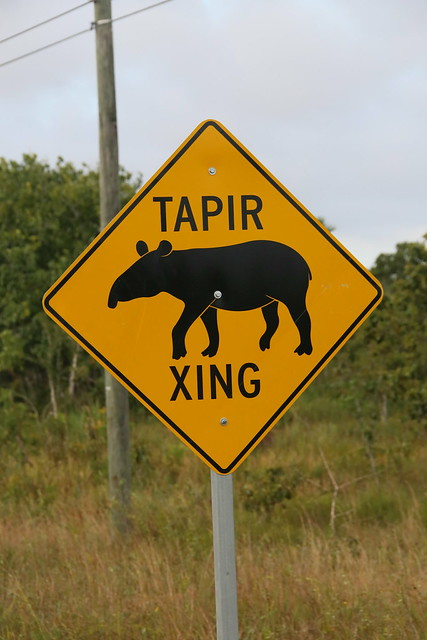 Tapir Crossing.  Belize.