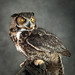 Great Horned Owl by Beth Reynolds