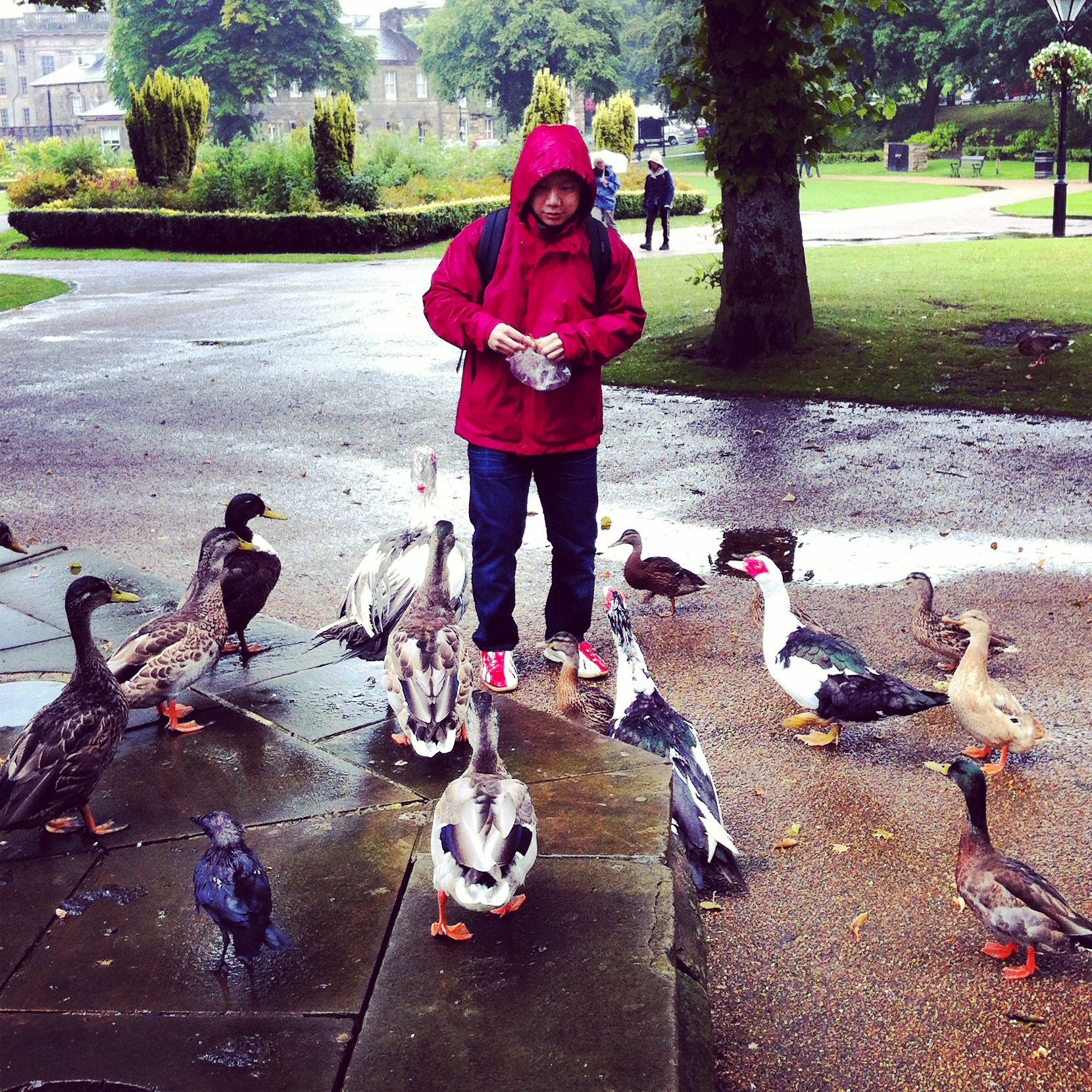 Yasu and the Ducks