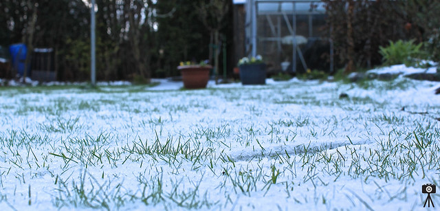 Photography Lately - Snowy Lawn