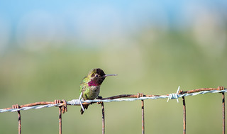 Sittin' on a Barbed Wire Fence