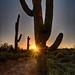 Sunrise in the Desert by Jack Belen
