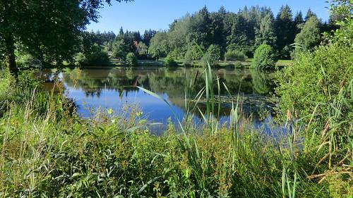 Wuerttemberg: small lake in the Sun / See bei Kammerstatt (Ostalbkreis)