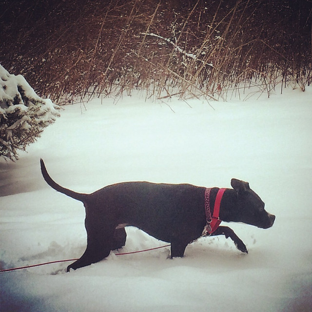 Little Black Dog in the Snow