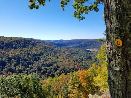 Upper Alpine Vista, Loyalsock Trail