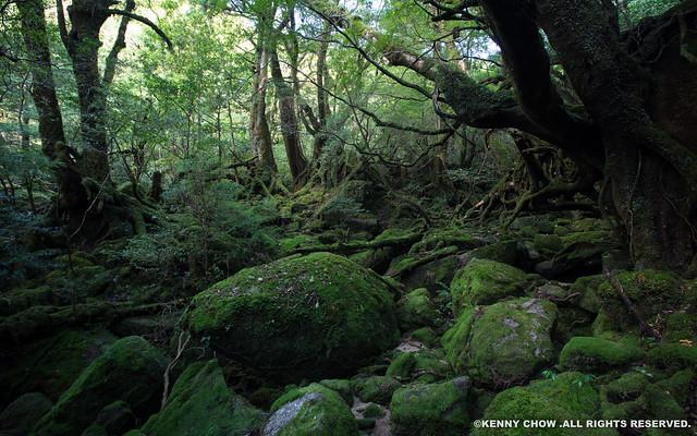 Yakushima, Japan, 幽靈公主之森, 日本屋久島