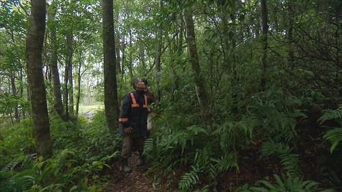 泰雅爺爺林福全在自有土地,親手種下原生種樹木已經成林。