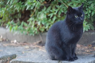 A cat in Mejo park 2014.12 No.3.