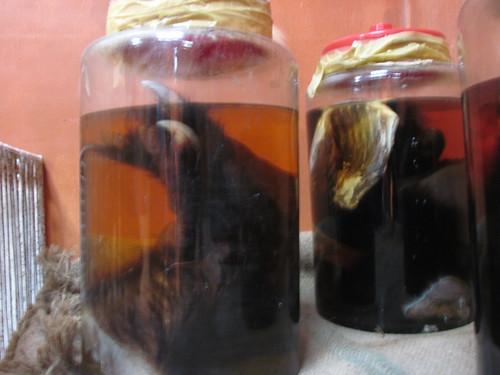 Bear Paw in fermented in wine