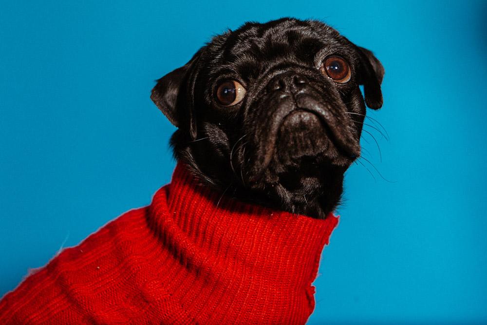 Pop Pups: Flowers