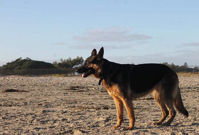 Dog Beach Coronado
