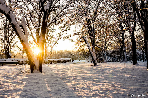 park trees sunset sunlight snow ice frozen ngc newyear romania bucharest outstandingromanianphotographers