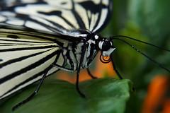 Papillons en Liberté 2015 - Photo 13