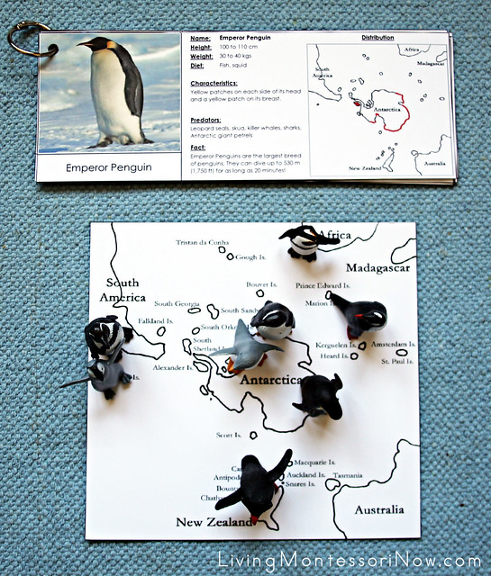 Penguin Geography Layout