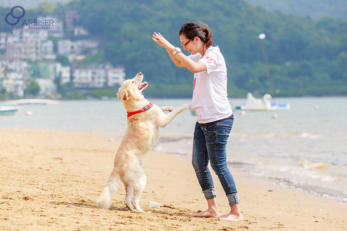 Dogs can be the perfect companion animal
