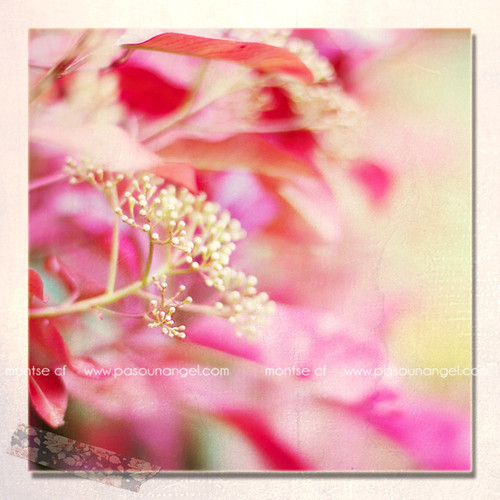 flor roja-1