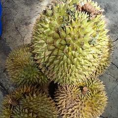 plant(0.0), fruit(0.0), produce(1.0), food(1.0), durian(1.0),