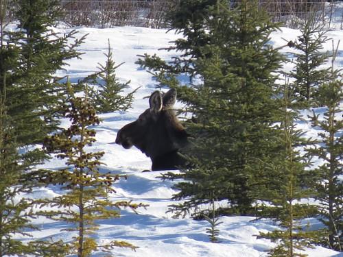 Yukon Wildlife Preserve Critters