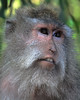 monkey series- mum portrait
