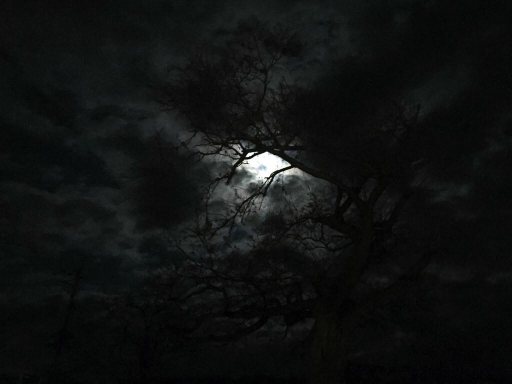 どっかの夜道