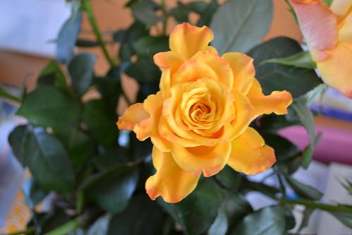 Rosen im Haus