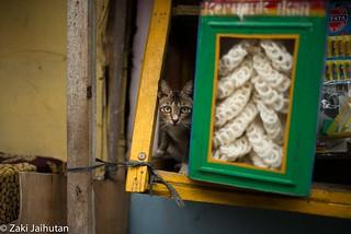 Cat Hides 2