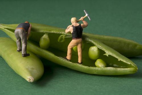 Sugersnap seeds