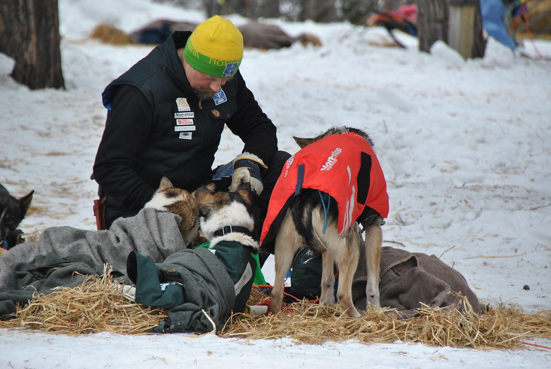 Harald Tunheim koser med hundene i Karasjok: Foto: Trygve Hagelund
