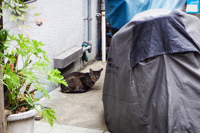 Today's Cat@2016-07-27