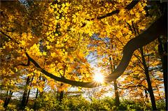 ...Autumn Shine...