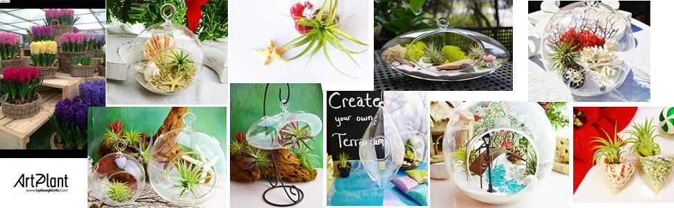 art plant | cay khong khi | air plant | terrarium | ban si khong khi | khong khi gia re