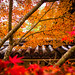 momiji '14 - autumn foliage #29 (Nison-in temple, Kyoto) by Marser