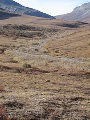 Alaska Arctic-KOVA