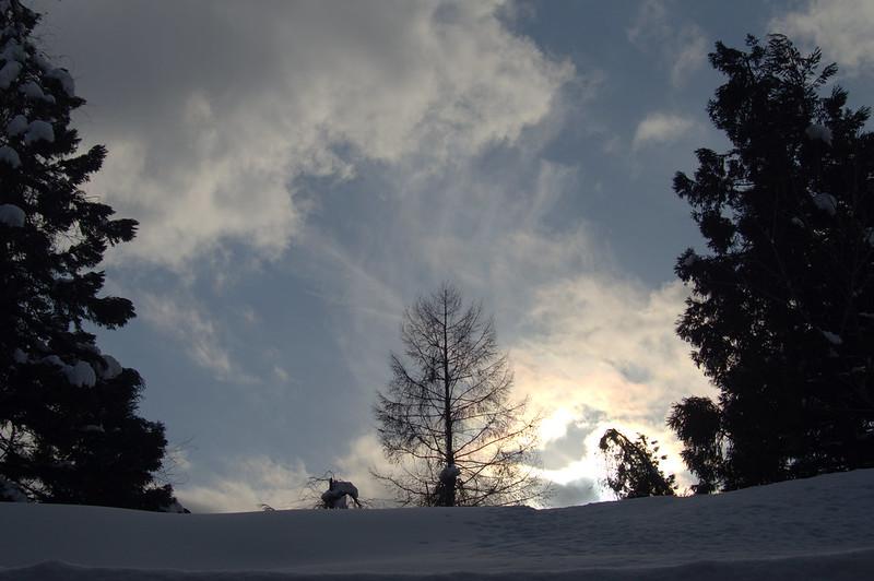 樹_201502