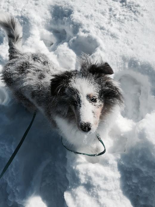 Snow Nisu