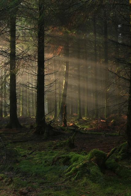 Wildaboutnature - EmPhoto. - Forest Stump & Light Rays, Exmoor, Somerset, UK - Please view big