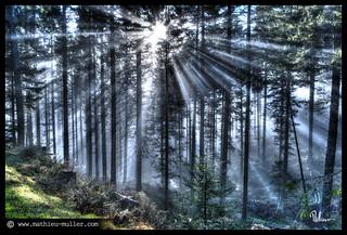 tout se dissout dans la lumière -B.Cantat-