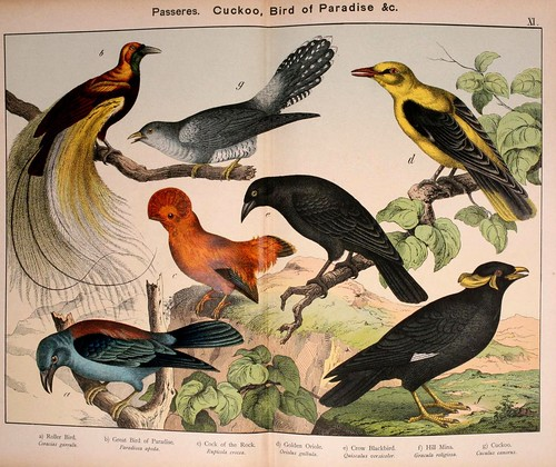 009-Natural history of the animal kingdom for the use of young people..- 1889-William Forsell Kirby