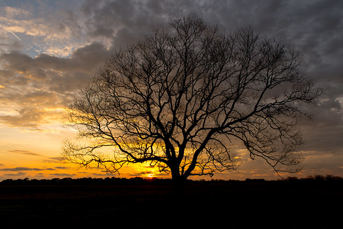 winter sunset tree colors field clouds al south alabama fairhope