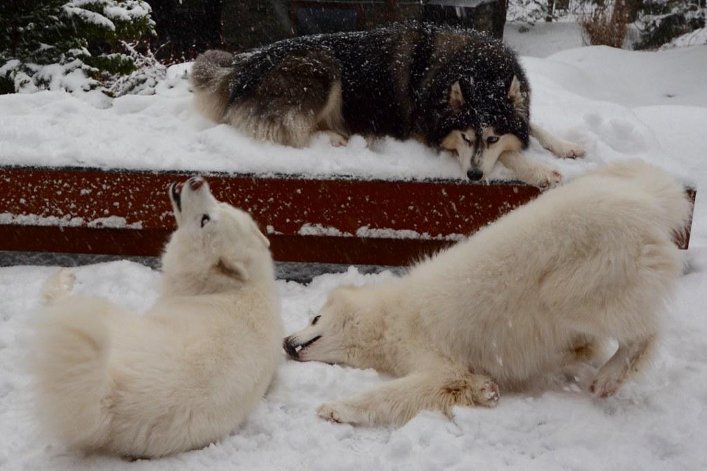 How the WooFPAK Prays for Snow!