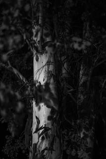 64/365 - Darkened Tree