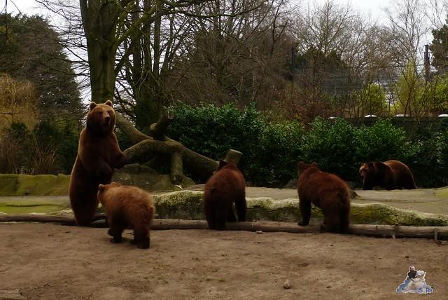 Tierpark Hagenbeck 14.03.2015  25