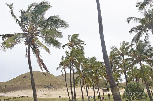 【写真】2015 世界一周 : アナケナビーチ/2021-04-05/PICT8635