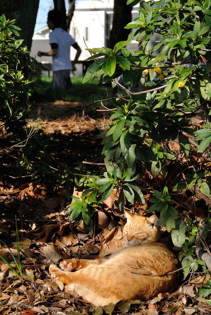 A cat in Mejo park 2015/03 No.2(One scene of commuting 2015/03 No.5).
