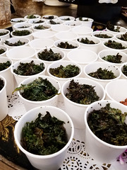 Day 227: Kale Cups