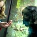Young lives meet, kids making friends with Yola the baby gorilla